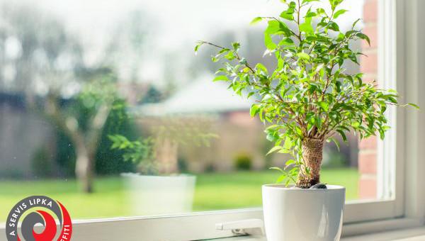 Small tree in a window